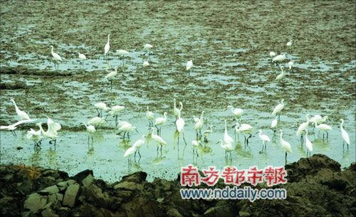 西湖惠州水去现白鹭张耀天健美操图片