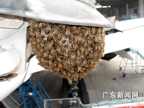在广州白云机场北区广州飞机维修公司