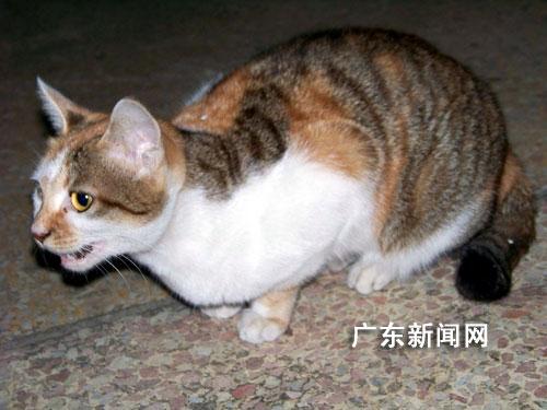 猫咪猎捕老鼠的能力由此可见一斑