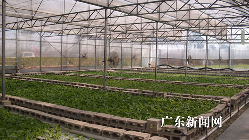 广东惠州立足产供销结合稳定农产品价格