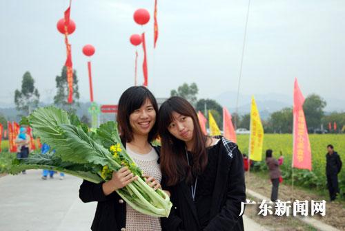 """广州 张乾铄/增城菜心每棵重达500克,被老广们称为""""菜树""""。张乾铄摄"""