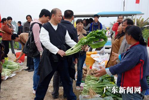 广州 袁宏伟/游客市民在乡村田园小道上选购增城菜心。袁宏伟摄