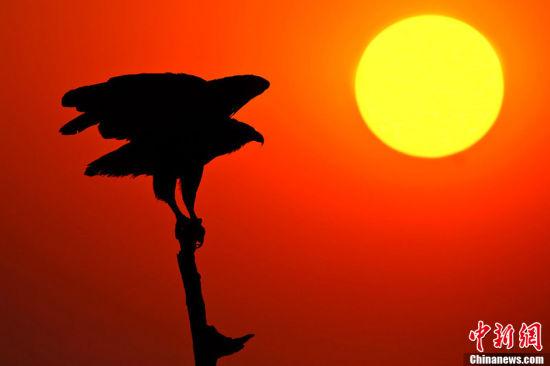 组图片拍摄的是非洲珍稀野生动物在夕阳下的唯美剪影