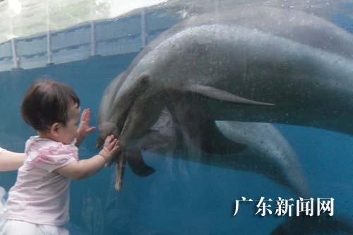 """二海豚""""小姐""""加盟深圳野生动物园"""