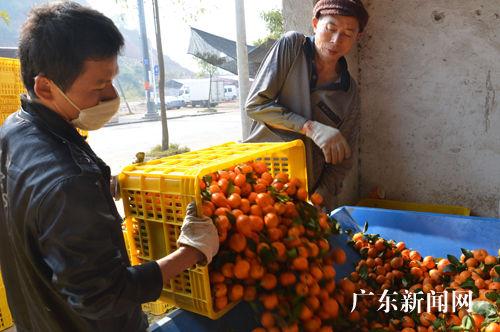 粤桂特色农产品展示及美食嘉年华在广东郁南启美食街厦大门口图片