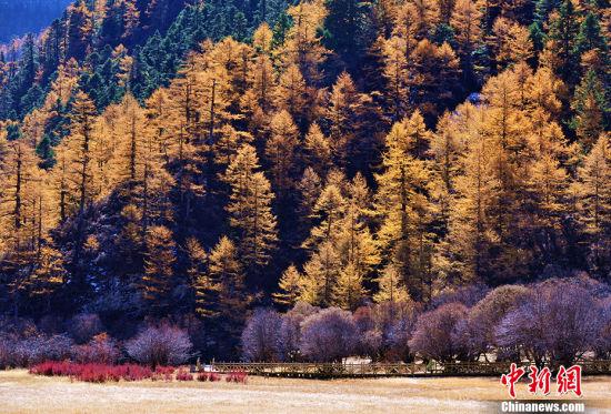 """四川稻城亚丁 推荐理由:蓝色星球上最后一片净土 九十月份,红草地与黄色的万亩杨树林让稻城变成了色彩的海洋,雪山在蓝天白云的衬托下,更显梦幻。亚丁藏语意为""""向阳之地"""",又名念青贡嘎日松贡布,即""""圣地""""之意,由于特殊的地理环境和自然气候,形成了独特的地貌和自然景观,是中国目前保存最完整、最原始的高山自然生态系统之一,也是世界美丽的高山峡谷自然风光,是中国香格里拉生态旅游区的核心。 地址:四川省甘孜藏族自治州稻城县(中新社记者 刘忠俊 摄)"""