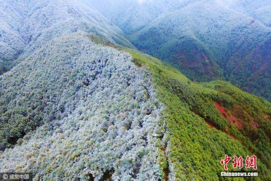 2016年11月30日,云南省曲靖市会泽县喜降瑞雪,森林覆盖的群山披上一层洁白的雪衣。图片来源:视觉中国