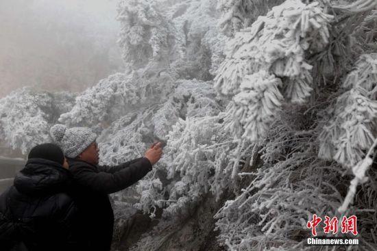 12月11日,河南洛阳老君山受较强冷空气影响,气温急骤下降,出现大面积的雾凇景观,玉树琼枝,晶莹剔透,美如画卷。中新社记者 王中举 摄