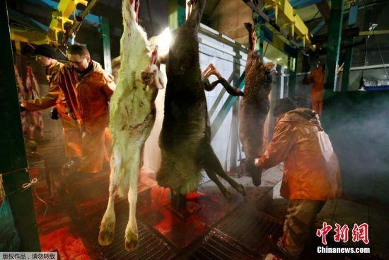 驯鹿人每处理加工一千克驯鹿肉可以拿到130卢布的补贴(约合人民币14元)。