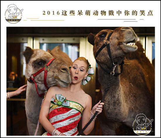 """万物有灵且美,动物和人类一样,有生命、有爱、也有喜怒哀乐。定格动物世界令人捧腹的画面,我们推荐2016年这些""""表情帝""""和""""段子手"""",希望大家能在欢笑中发现生灵的美好。   当地时间11月1日,参加演出的骆驼""""演员""""冷不丁和美女来了个""""亲密互动""""。TIMOTHY A. CLARY/AFP"""