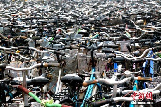 """2017年02月08日,郑州,自行车对于大学生们来说,已经是在校生活学习不可或缺的代步工具,但每年各个学校内都会出现大批""""僵尸车""""。在郑州大学校园内,两千辆自行车被学校有关部门收集在一起,场面壮观,有网友戏称是""""钢铁坟墓""""。图片来源:视觉中国"""