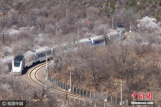 2017年3月26日,北京居庸关长城脚下,山花渐次盛开,和谐号列车行驶在花海中,驶向春天,美如画卷。王明允 摄 图片来源:视觉中国