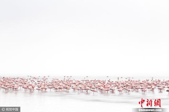 """瑞士摄影师Alessandra Meniconzi作品《火烈鸟之魂》获得2017索尼世界摄影大赛公开组""""动物类""""大奖。 图片来源:CFP视觉中国"""