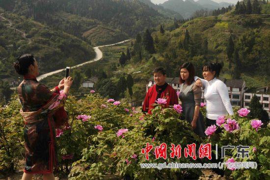 太平牡丹园每年吸引了众多各地游客前往赏花。