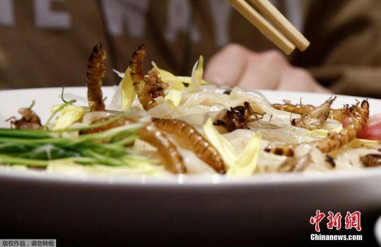"""近日,好奇心十足的日本饕客在东京一家餐厅外排起了长队,争相品尝""""暗黑料理""""界的新宠――炸昆虫拉面。据报道,位于东京的Nagi豚骨拉面店在4个小时内,就卖光了当天活动限定的100碗昆虫拉面。这一碗炸昆虫拉面端上桌,最抢眼的就是拉面上放的""""配菜""""――10几只小蟋蟀和面包虫。客人会将面沾入蟋蟀、蚱蜢或蚕粉风味的汤汁后食用。"""