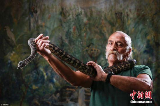 当地时间2017年4月10日,澳大利亚新南威尔士州悉尼,一名在温莎戒毒中心的戒毒人员正抓着一条沉溺于毒品的丛林蟒。这只狡猾的蟒蛇在一个冰毒实验室附近被抓获。它在那里呼吸了大量含有毒品微粒的空气。这条两米长且富有攻击性的蛇很生气,被小心的交付给戴有手套的戒毒人员。图片来源:视觉中国