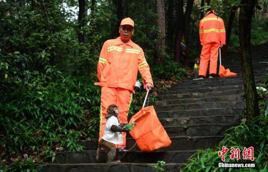 6月5日,正值世界环境日,湖南长沙石燕湖金龟岛上的工作人员与猴子装扮成清洁工巡山捡垃圾,猴子将一些被随意丢弃的饮料瓶拾起放入垃圾袋,为自己的家园保洁。杨华峰 摄