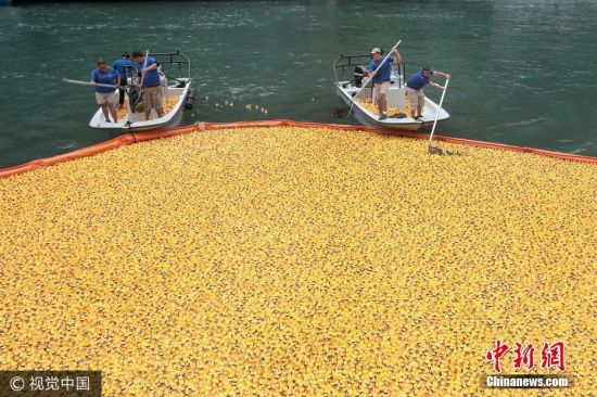 当地时间2017年8月3日,美国芝加哥举办一年一度的慈善筹款橡胶鸭比赛。图片来源:视觉中国