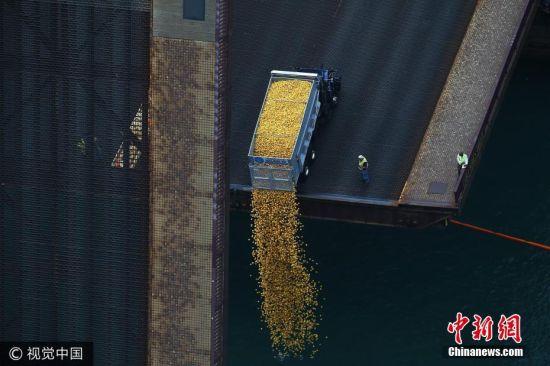 """约6万只""""小黄鸭""""从桥上倾泻至芝加哥河中。图片来源:视觉中国"""
