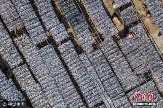 9月9日,深圳南澳晒渔场,烈日下工人顶着闷热高温和浓重鱼腥味作业,一排排木架上整齐地摆满了密密麻麻的鱼干,俯瞰之下,蔚为壮观。 Eric 摄 图片来源:视觉中国