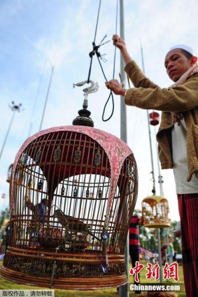 """当地时间9月18日,泰国那拉提瓦举办了一场别开生面的""""鸟儿歌唱大赛""""。来自泰国、马来西亚、新加坡等地的1400多只鸟儿参赛。"""