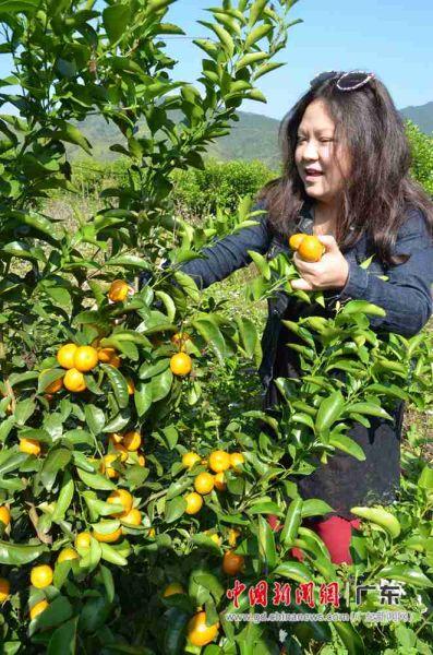 大咖在感受果农丰收的喜悦。