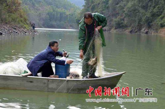 大咖在新丰县大席河上采访渔夫作业。