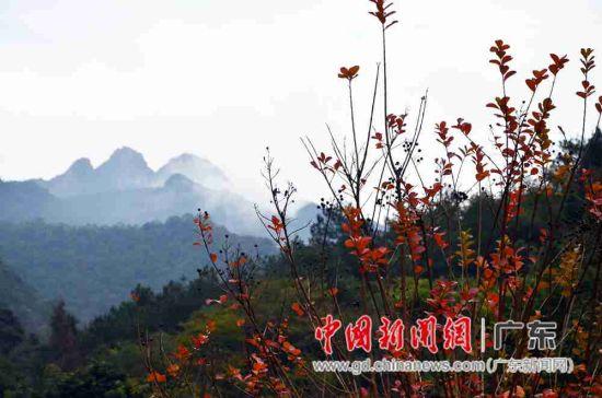 阴那山五指峰的秋色。