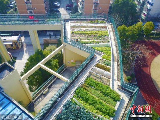 1月22日,杭州濮家小学屋顶一片绿油油的农田,由学生、老师、家长和省农科院的农业专家一起,在这里建设的现代化生态农场。近1300平方米的教学楼楼顶鱼稻共生池、水果培育园、农作物种植园、向日葵环形园等应有尽有。学校还通过建设沼气池和自动灌溉系统等,真正做到了废弃物零排放的区域循环农业。朱引炜 摄 图片来源:视觉中国