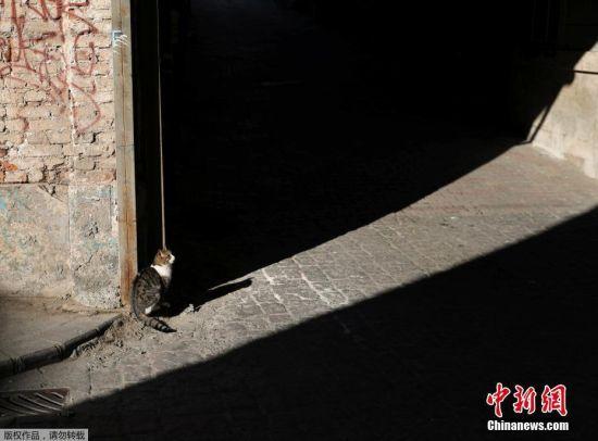 当地居民和小贩们通常知道附近出没的猫咪名字,这些可爱的动物也成了人们日常聊天的主题。图为伊斯坦布尔街头的一直猫咪。