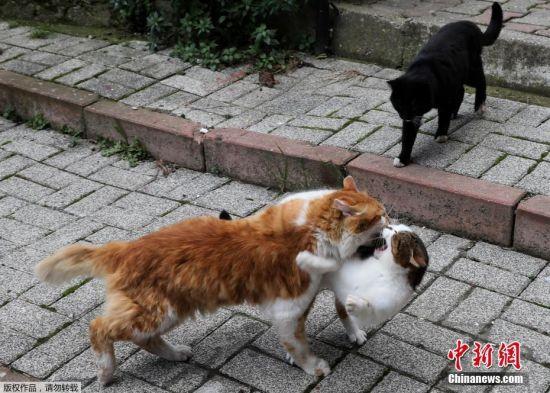 在伊斯坦布尔街头,几只猫嬉闹追打,完全不避讳行人。