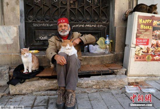 在伊斯坦布尔街头,一名男子和流浪猫和平共处。
