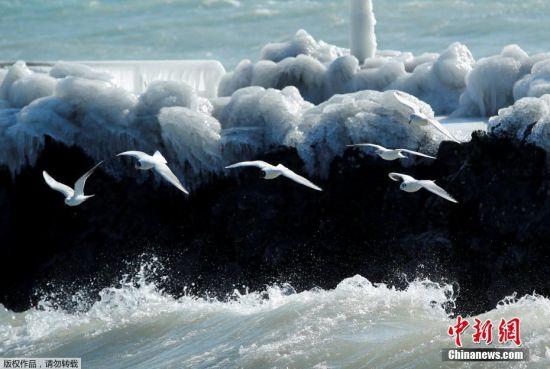 """从2月26日开始,一股来自西伯利亚的强冷空气横扫欧洲,造成多国气温骤降至摄氏零度以下,部分地区更创下入冬以来的最低纪录。急剧下降的气温虽然给欧洲各国民众带来不便,但""""冻人""""美景也随之出现。图为当地时间2月26日,瑞士日内瓦湖畔呈现冰冻美景,海鸥从冰块前飞过。"""