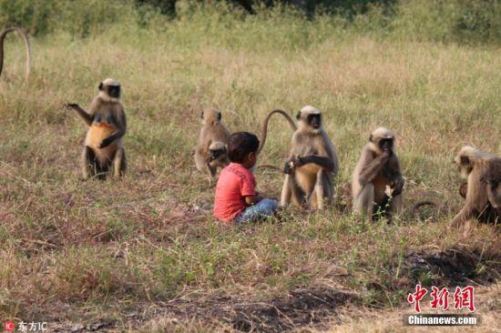 3月8日消息(具体拍摄时间不详),在印度南部的Hubli小村庄,2岁的孩童Samarth Bangari与一群长尾黑颚猴建立了不可思议的深厚友谊。这些小猴子每天都去造访Samarth,有些胆大的甚至每天早晨6点整去他的房间喊他起床。Samarth也非常喜欢与小猴子们玩耍,和它们分享食物。中午的时候,当Samarth从幼儿园放学回来,小猴子们已早早等在他家门口,看到此景时,Samarth便马上冲进厨房,装满一口袋食物拿去和他的猴子朋友们分享。 图片来源:东方IC 版权作品 请勿转载