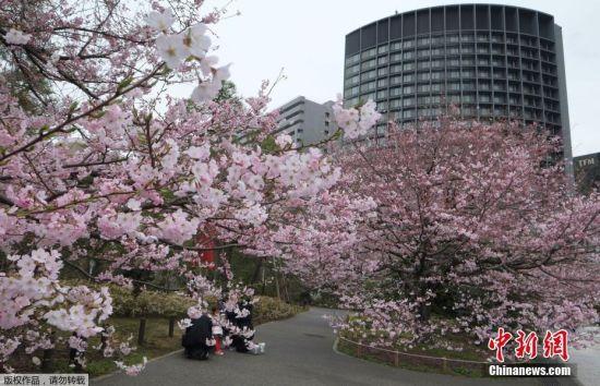 近日,日本东京中心地区的樱花盛开。3月17日下午,日本气象厅进行观测后宣布,东京正式进入樱花季。这次樱花季比去年早了4天,也比往年平均日期大幅提前了9天。图为当地时间3月19日,东京民众在樱花树下欣赏美景。