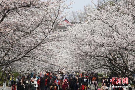 3月22日,民众在南京林业大学樱花大道上赏樱花。眼下随着温度的不断升高,江南各地各类春花跟随着春天的脚步竞相开放。中新社记者 泱波 摄