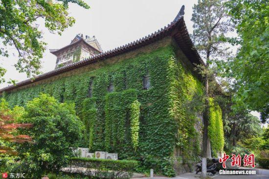 5月8日,初夏时节,南京大学北大楼上被爬山虎紧紧缠绕,仿佛裹上一层绿色的外衣,满墙的爬山虎紧紧依附着墙面,以一种宁静的力量和喜悦的生长姿态,爬得轻灵而缓慢,轻吐岁月的恬静和悠然。中西合璧建筑风格的北大楼建于1917年,同年爬山虎开始生长,至今已过百年。方东旭 摄 图片来源:东方IC 版权作品 请勿转载