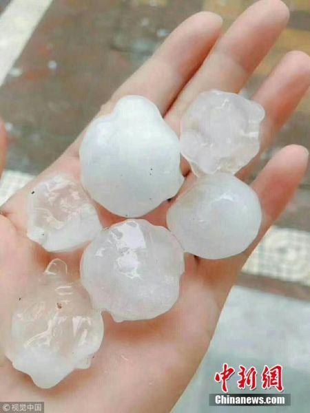 5月15日下午2点半,陕西商南县突降特大冰雹,持续20分钟左右。目击者称有鸽子蛋大小,直径4厘米左右。 华商报陈永辉 摄 图片来源:视觉中国