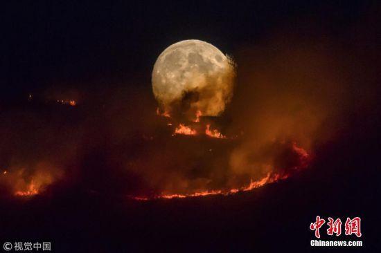 当地时间2018年6月26日,英国斯泰利布里奇的高温干燥天气导致当地发生野火,大火横扫了多维斯塔斯和巴克顿谷之间的荒野。夜幕降临,一轮满月从火海中升腾而起,景象十分壮观。 图片来源:视觉中国