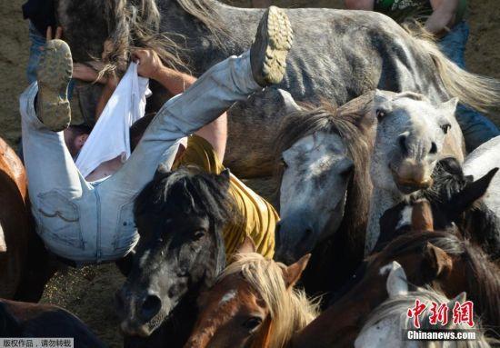 """近日,西班牙蓬特韦德拉,一年一度的""""剃兽节""""在Sabucedo小村举行,人马摔跤大战惊险刺激。"""