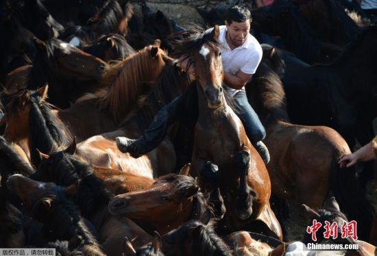 """""""剃兽节"""" 有着400多年的历史,节日期间,当地人会将野马轰赶到空地上,以便为其修剪鬃毛和尾巴。"""