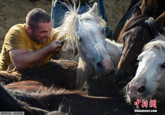 他们还会勇敢地上前与野马进行摔跤和搏斗,来展示自己高超的驯马技巧。