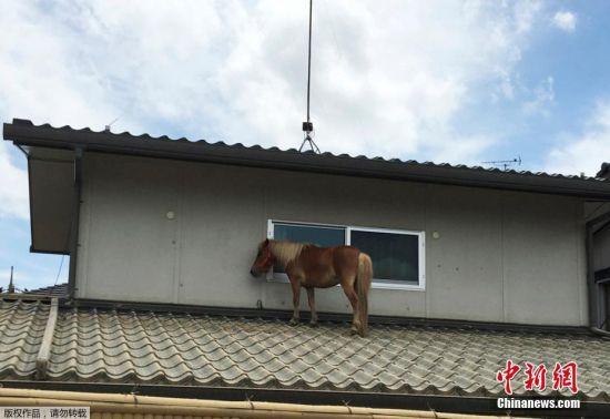 近日,日本境内遭遇洪涝灾害,人员伤亡和财产损失甚重。上周五(7月6日),一匹小马在洪水中失踪。周一(7月9日),人们发现了这匹失踪的小马――它竟然出现在一户民居的屋顶上!没人知道它是怎么上去的。