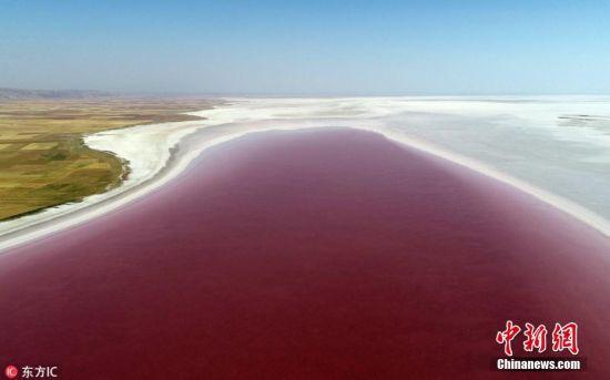 当地时间2018年7月12日,土耳其阿克萨拉伊,当地盐湖内盐藻(Dunaliella salina )生长,使得湖水变成粉红色。盐藻是一种喜盐微藻,一般生长在海盐或湖盐地区,常被用于化妆品和膳食补充剂。图片来源:东方IC 版权作品 请勿转载