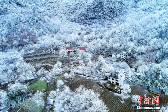 """连日来,湖北多地出现持续低温雨雪天气,在平均海拔1200米以上的黄良坪村,低温和雨雪把树林变成了""""冰林"""",从空中俯瞰,犹如一颗颗水晶镶嵌在地面,呈现出一幅""""美丽冻人""""的画卷。闫京东 摄"""