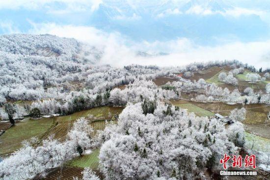 """低温和雨雪把树林变成了""""冰林""""。闫京东 摄"""