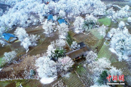 """""""冰林""""冬季美景让人叹为观止。闫京东 摄"""