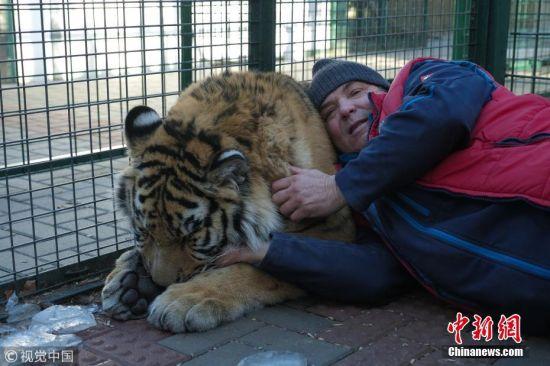 """近日,捷克共和国利波瓦,彼得・奥古斯汀和他喂养的动物们在一起。53岁的彼得・奥古斯汀是一个动物保护区的管理人员,这个保护区内生活着总计达150多只的40多种动物。彼得成功成为了这些动物的""""头目"""",在过去十年时间里,他一直在与一些被认为""""危险""""的野生动物打交道,并认为动物是他生活的重心。目前,彼得与保护区里一只重达44英石(约合279千克)的老虎保持着亲密友善的关系,他每天都要亲手喂养和拥抱它。 图片来源:视觉中国"""