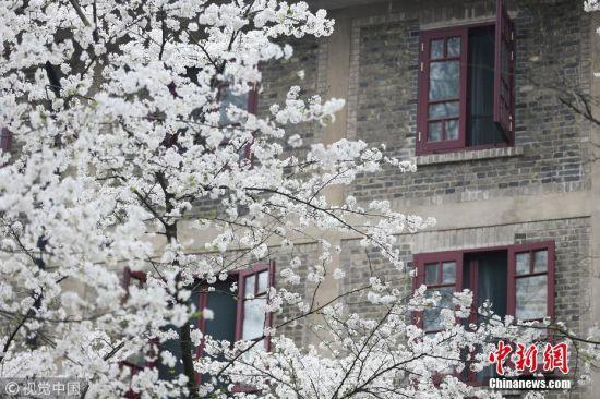 """3月21日,武汉大学樱花季首日,提前网上预约赏樱的八方游客如约而至。此前,武汉大学发布《关于加强2019年樱花开放期间校园管理的通告》,3月21日至4月4日樱花盛放期间,校门及校内局部区域实行封闭管理。游客可通过武汉大学官网、官方微博、官方微信、移动服务平台""""智慧珞珈""""APP或官方抖音进入预约系统,提前3天进行实名登记预约。工作日每天预约限额1.5万人,周末每天预约限额3万人。进校时段为工作日8时30分至17时30分,周末8时至18时。武汉大学在入口处设置""""人脸识别""""系统,对入校游客实行身份核验。吴薇 摄 图片来源:视觉中国"""