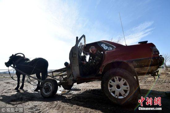 """近日,白俄罗斯31岁的农民亚历克赛・乌西科夫驾驶一辆由老爷车爆改而成的""""马车""""上路,格外拉风。亚历克赛・乌西科夫(Alexei Usikov)从小就喜欢做东西。他最新的发明是一款由一辆破旧的奥迪80老爷车和一匹马结合而成的""""马车"""",他很享受在当地驾驶这辆自制的""""马车""""。图片来源:视觉中国"""